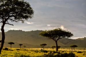 Masai Mara by Michael Herrera