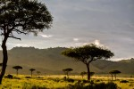 Budget Kenya Family Safari