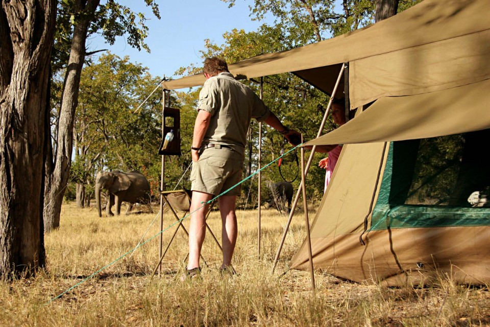 Elephant and tent at Moremi campsite