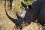 5 Day Kruger Park Big 5 Walking Safari to Balule