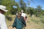 5 Day Kruger Park Big 5 Walking Safari to Balule