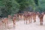 Kruger Park Big 5 Walking Safari to Balule