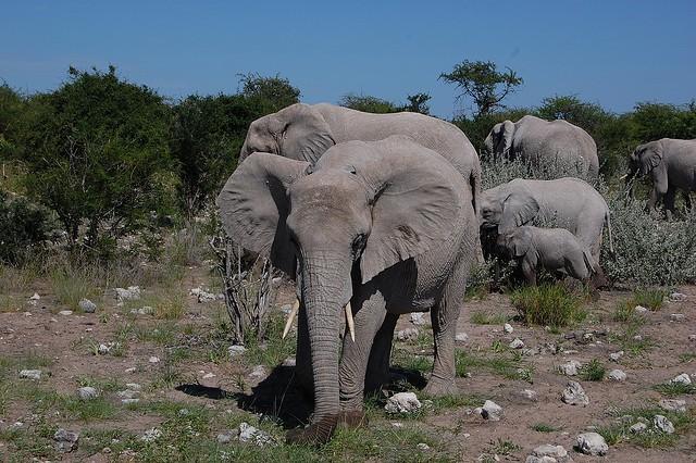 Elephant  by Jeremy T. Hetzel