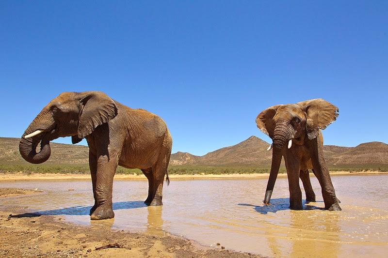 Aquila safari elephants