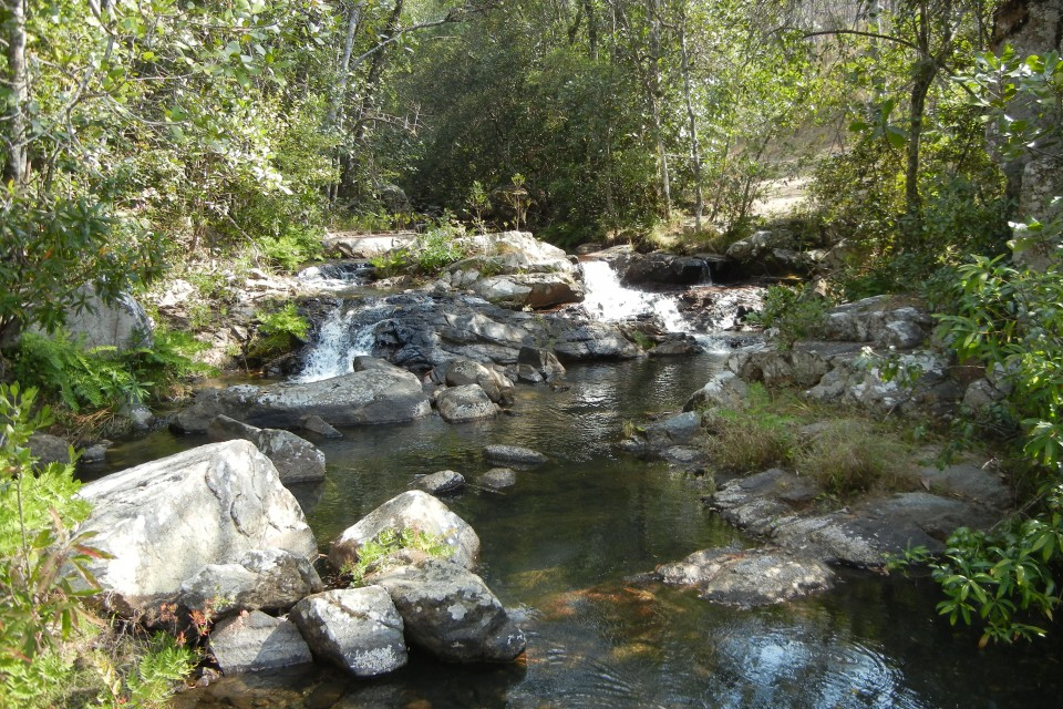 Dzalanyama Forest Reserve