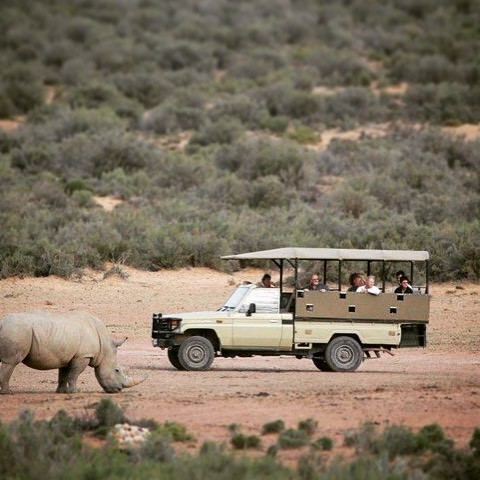Aquila game drive