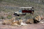 Budget Cape Town Big Five Day Safari