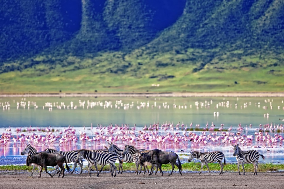 Zebra, wildebeest and flamingoes in Ngorongoro Crater