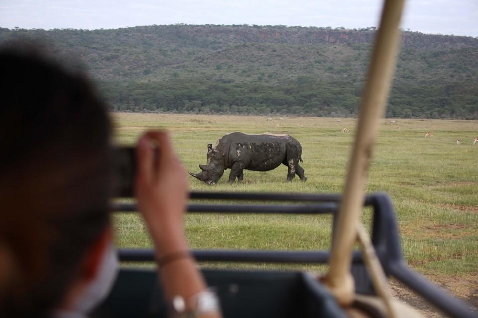 Sarova rhino