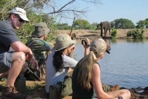 Bateleur walking safari