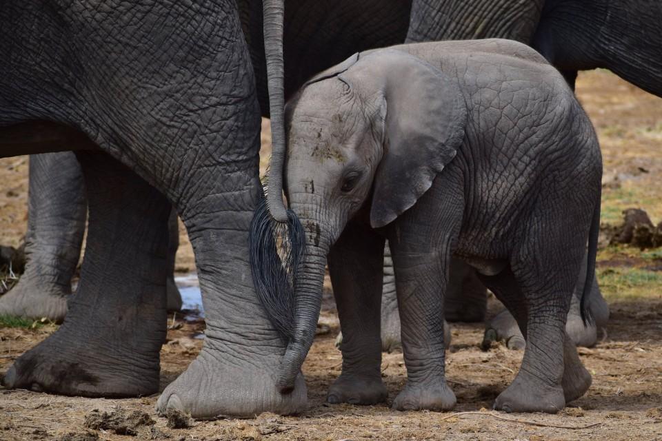 Amboseli elephants  by Satya