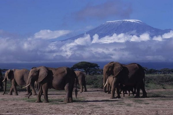 air plaines with Kenya Masai Mara Lodge Safari on File GoAir Airbus A320 200  Blue additionally pilation likewise Plans Avions Papier together with Kenya Masai Mara Lodge Safari in addition Tornado Week Wray Colorado May 7.