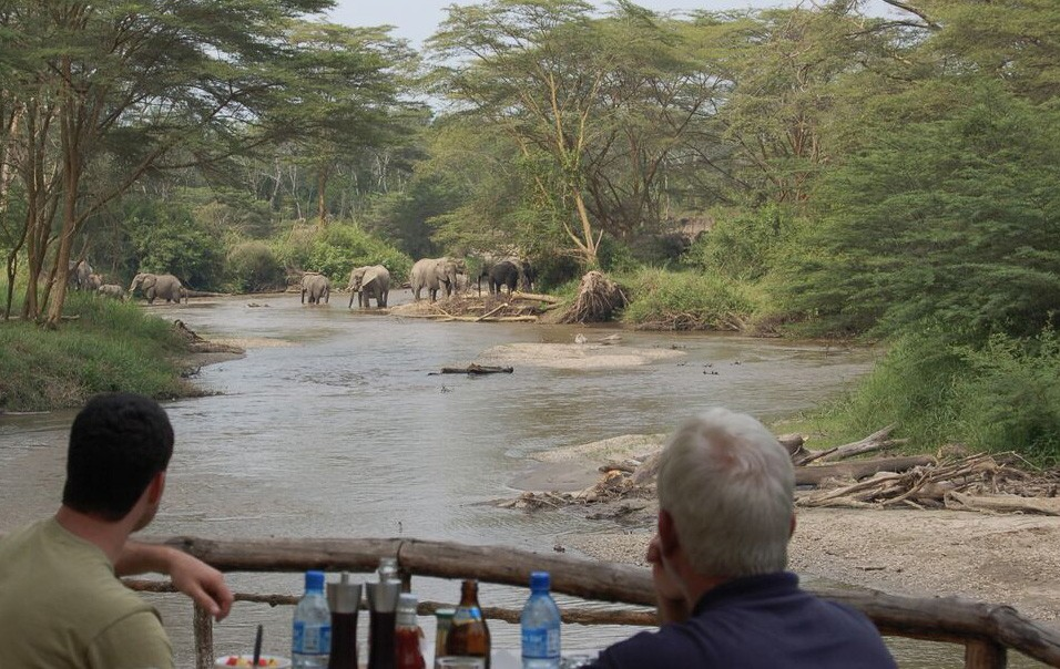 Ishasha elephants