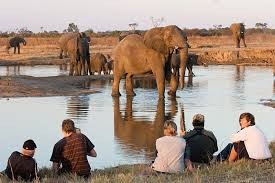 Watching elephants
