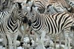 Cape Town to Windhoek African Safari