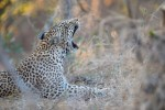 Kruger & Zimbabwe Exclusive Budget Safari