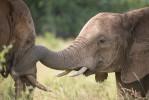 Kruger elephants