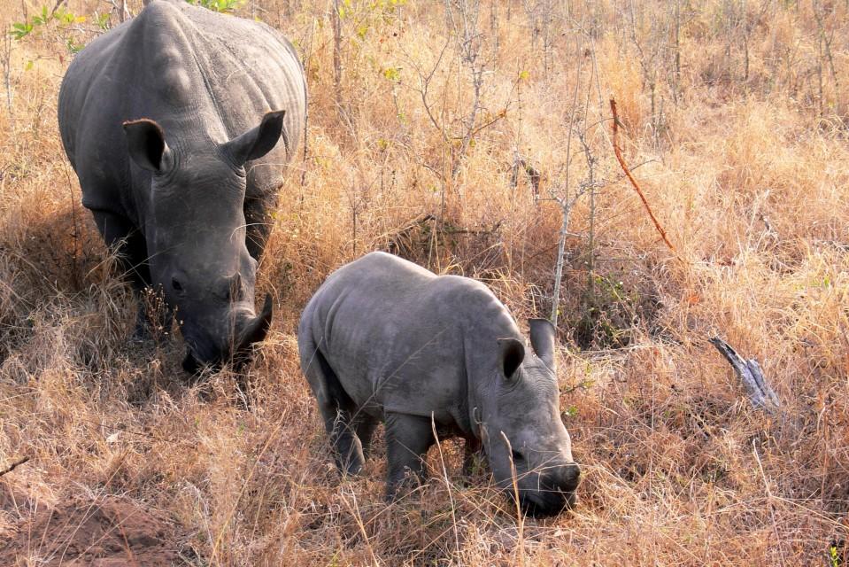 Rhinos  by Violator1