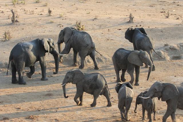 Elephants in Hwange  by joepyrek