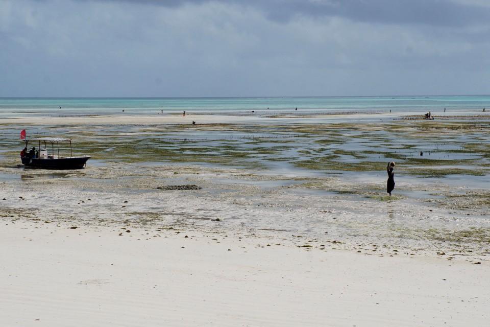 Zanzibar beach  by Jenn