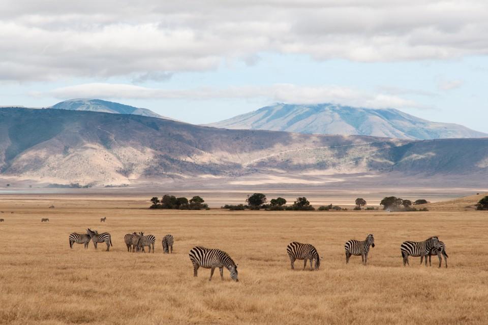 Zebras in Ngorongoro  by Yoni Lerner