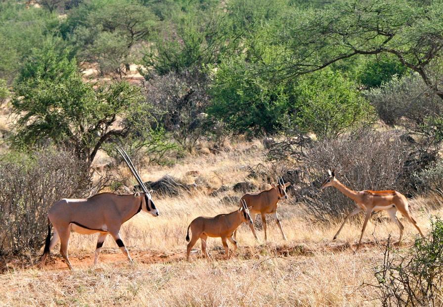Antelopes  by Davida De La Harpe
