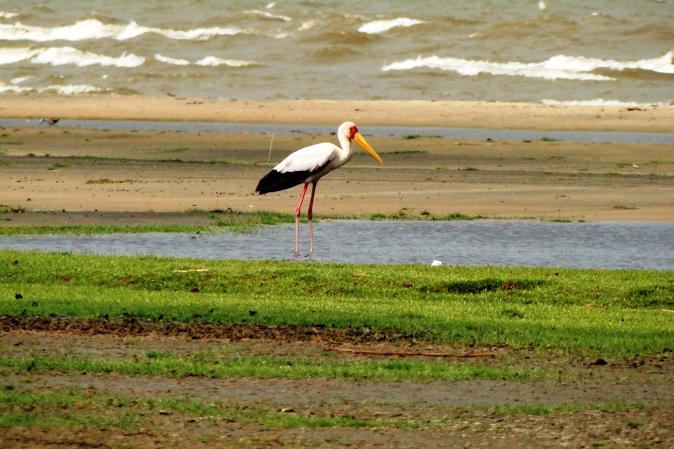 Stork at Jade Sea