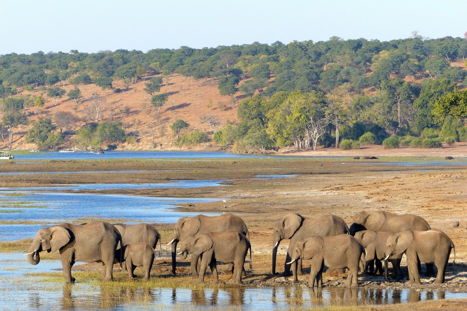 Chobe elephants  by Martin Pilkington