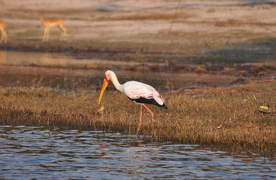 Chobe birdlife  by abi.bhattachan