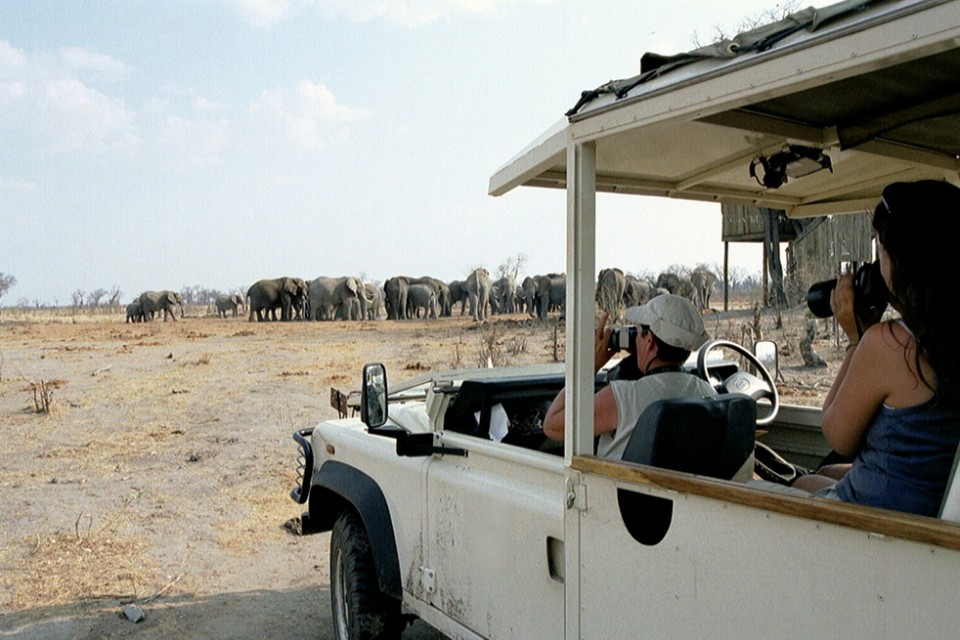 Elephants game drive in Africa