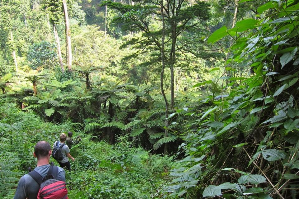 Bwindi Forest  by Martijn.Munneke