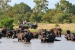 4 Day Kruger Bush Camp Safari