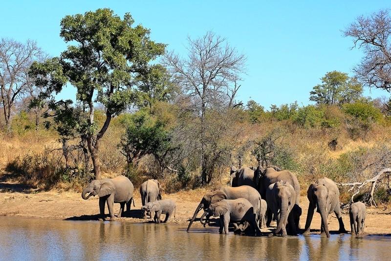 Timbavati elephant herd