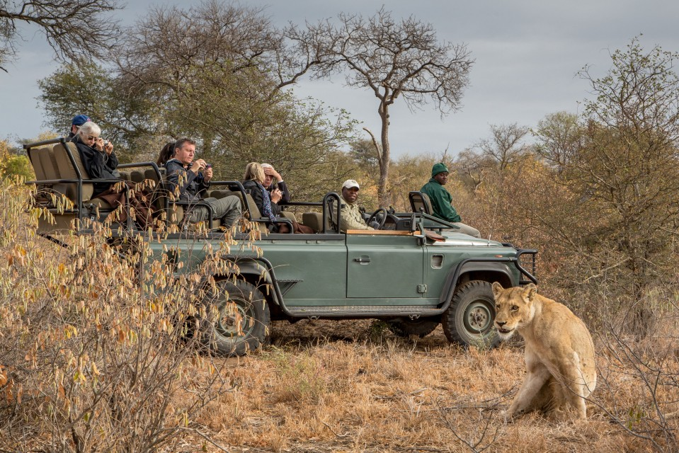 Timbavati lion vehicle