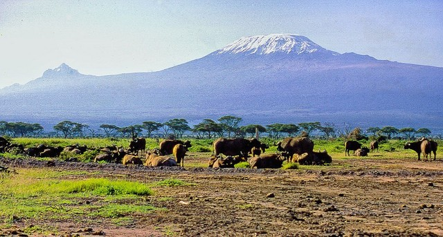 Amboseli National Park, overlooked by Mt Kilimanjaro  by Ray in Manila