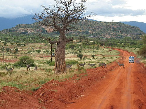 Tsavo East National Park  by Simona Rode