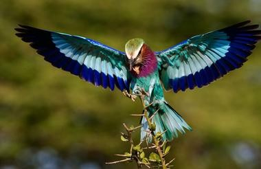 Birdlife, Moremi Game Reserve