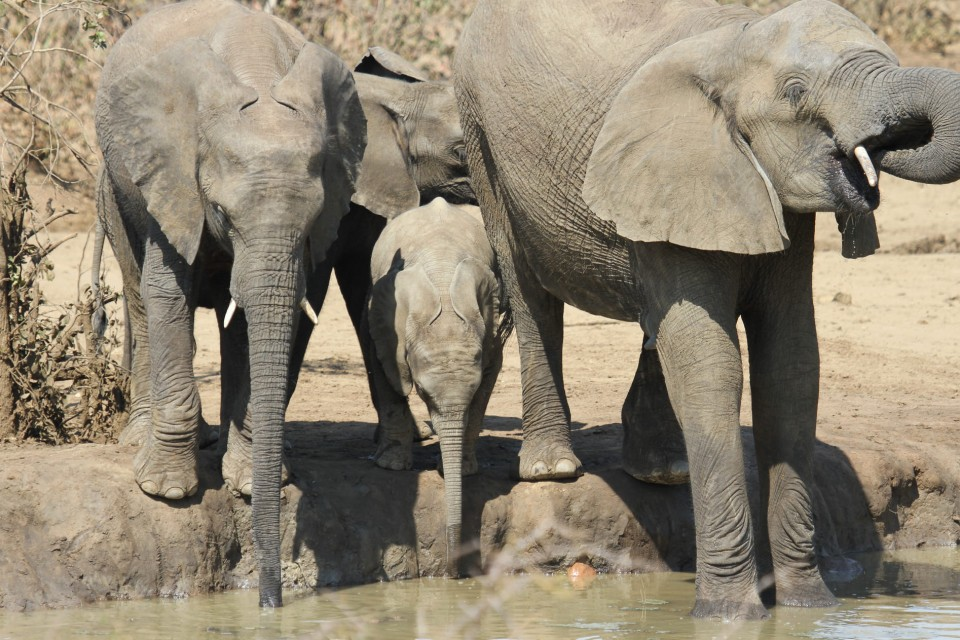 Kruger elephants  by Derek Keats