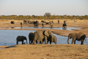 Hwange elephants by Michael Sprague