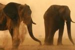 Budget Moremi & Chobe Botswana Lodge Safari