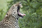 5 Day Kruger & Sabi Sands Lodge Safari