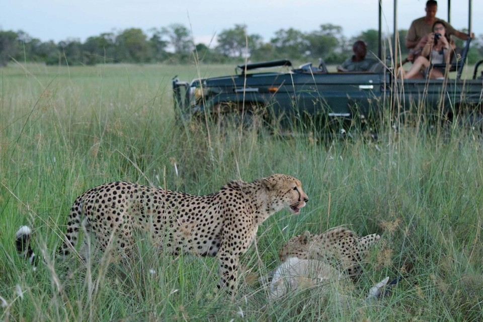 Delta cheetah game drive
