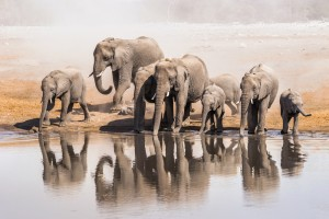 Family of elephants in Namibia