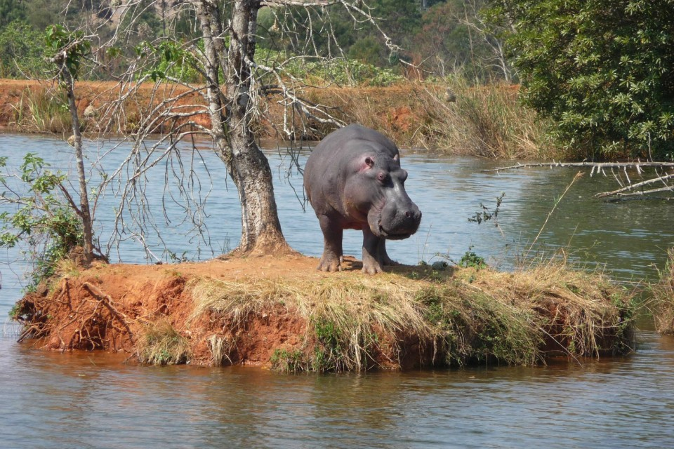 Mlilwane sanctuary hippo  by jack4trip