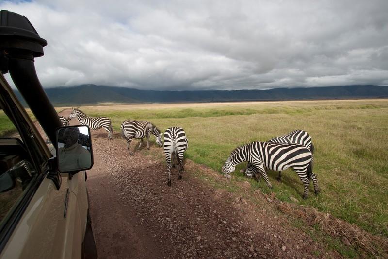 Ngorongoro zebras