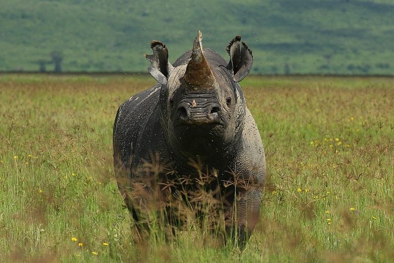 Ngorongoro Crater, Tanzania  by Demetrius John Kessy