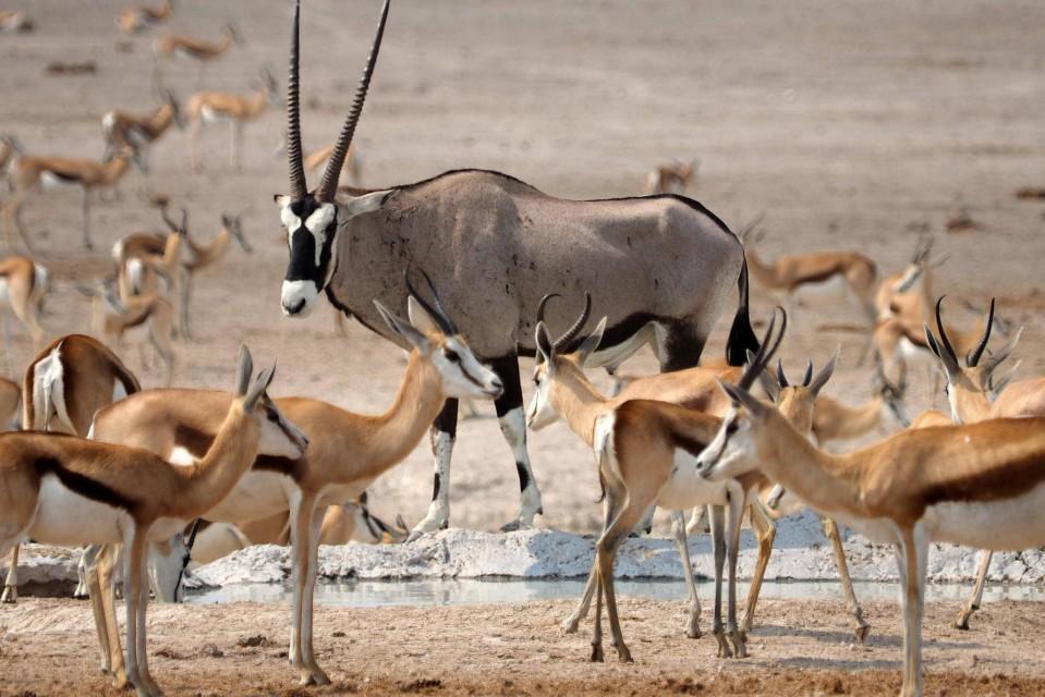 Etosha, Namibia  by simonsimages