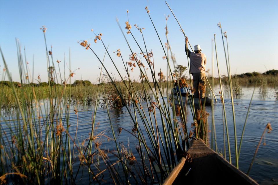 Okavango Delta, Botswana  by Athena Lao