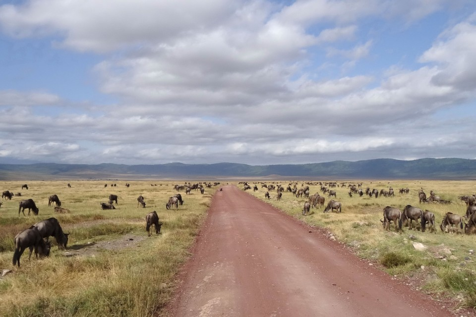Ngorongoro wildebeest  by Ian Cochrane