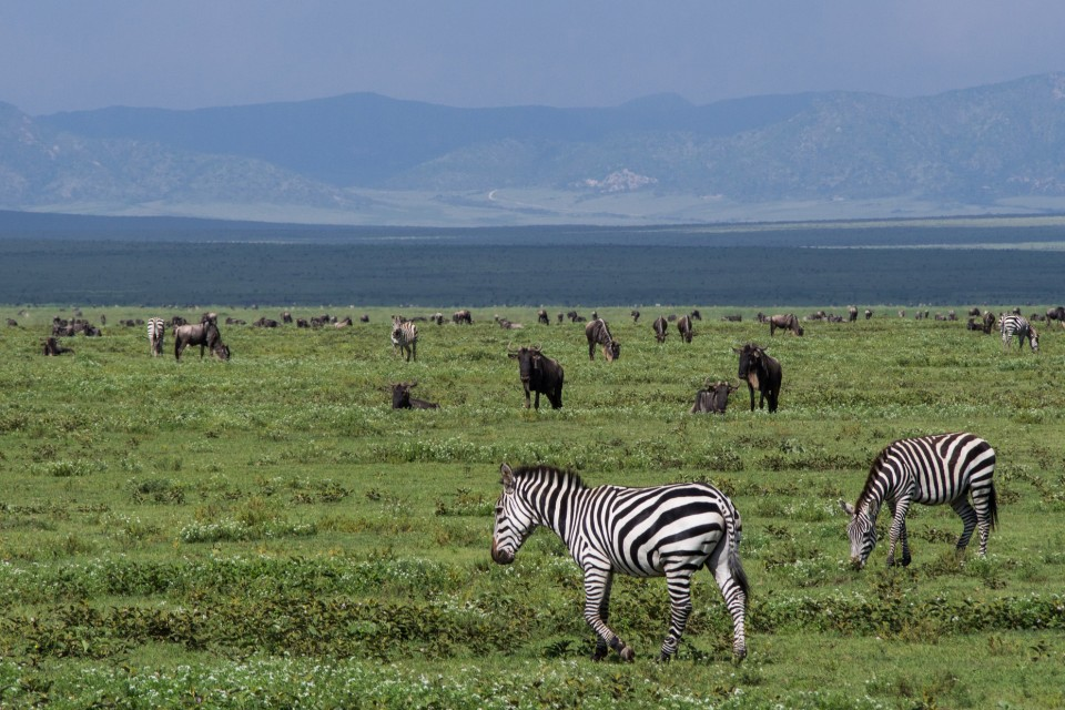 Ngorongoro Crater  by Timo Luege